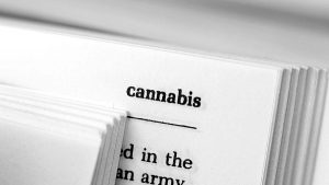 Cannabis discussion paper exploring the effects on mental capacity